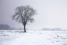 tree-in-winter