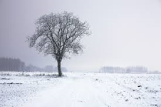 tree-in-winter